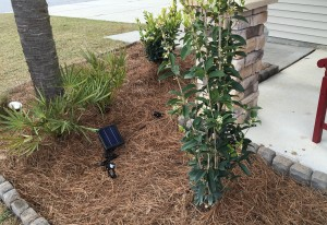 Charleston Residential Landscape Design Coastal Theme Installation