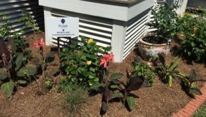 Charleston Residential Landscape Design Perennial Flower Bed