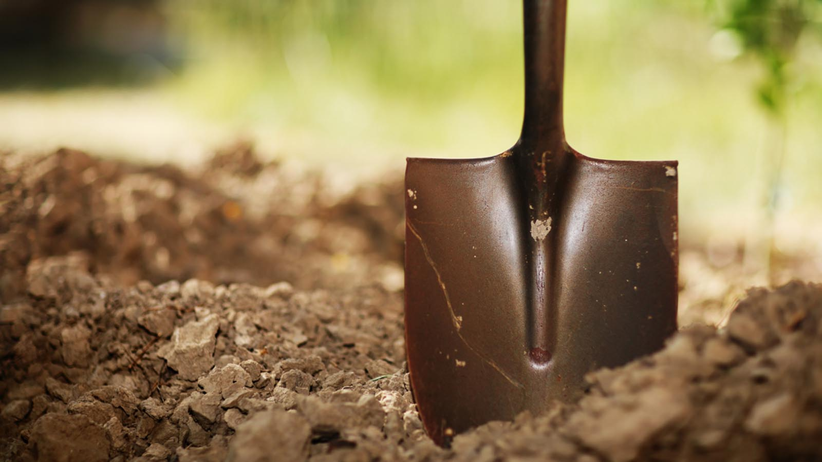 Charleston Residential Landscape Design Shovel