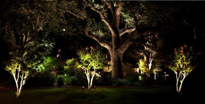 Oak Tree Lighting, illuminated oaks and crepe myrtles