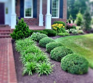 Landscape design and installation philosophy seth mason for Landscaping plants south carolina