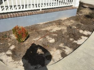 Charleston SC Landscape Designer Before James Island 2