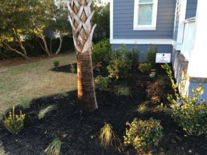 Charleston SC Landscape Designer Makeover James Island