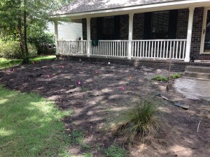 Charleston Landscaper Yard Makeover Before 2