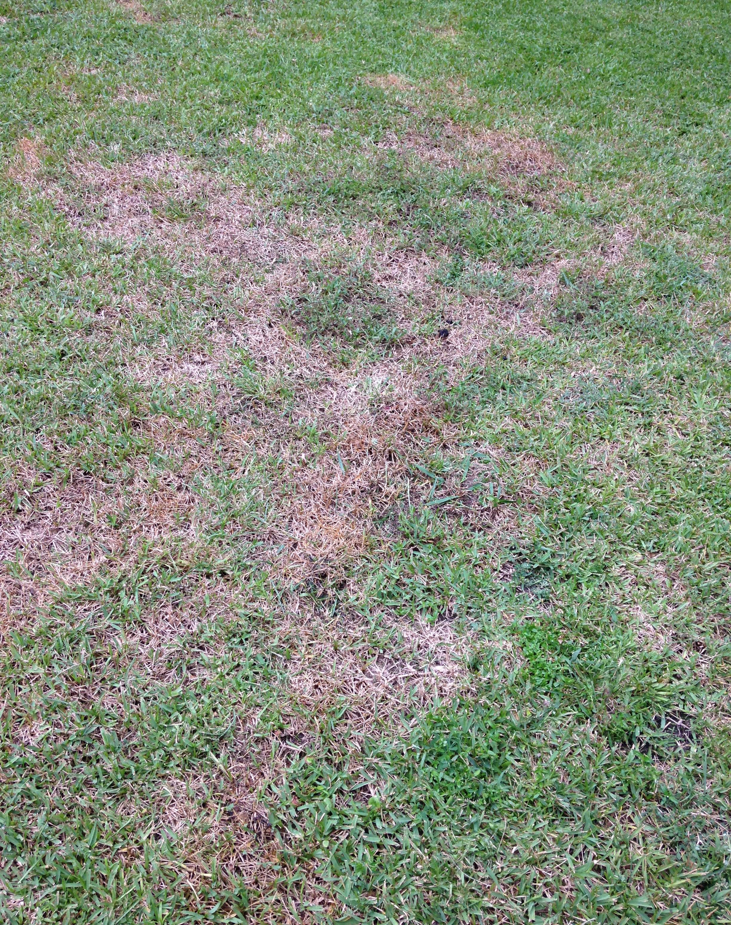 Charleston Residential Landscape Design - Fungus and Armyworms