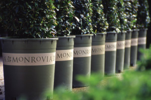 Charleston Residential Landscape Design - Monrovia Brand Plants