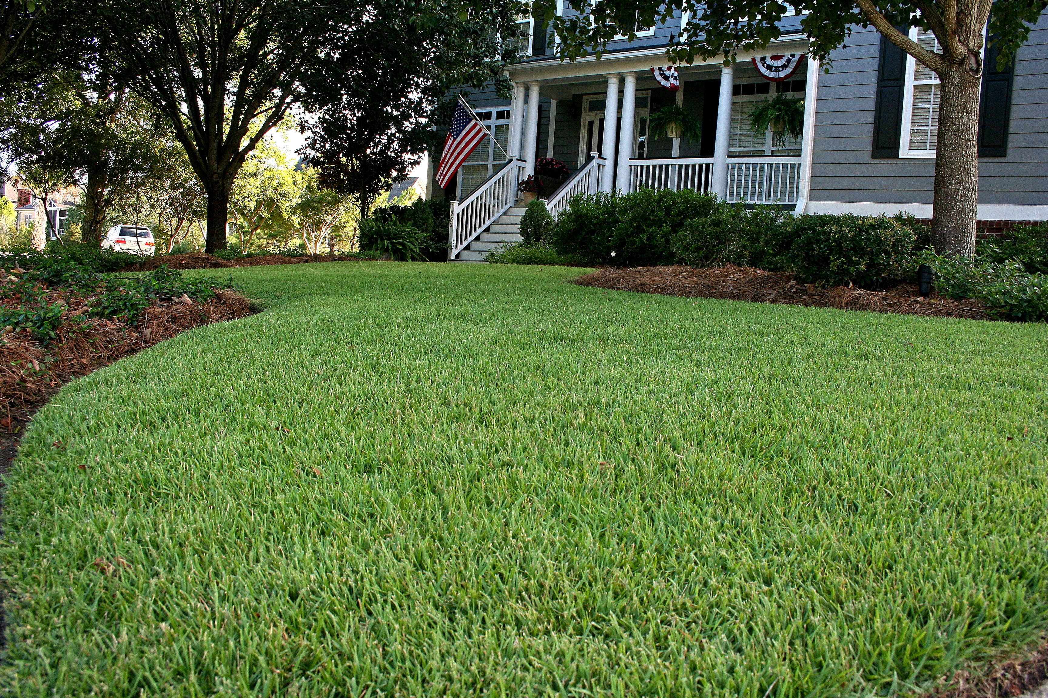 Charleston Residential Landscape Design - Empire Zoysia