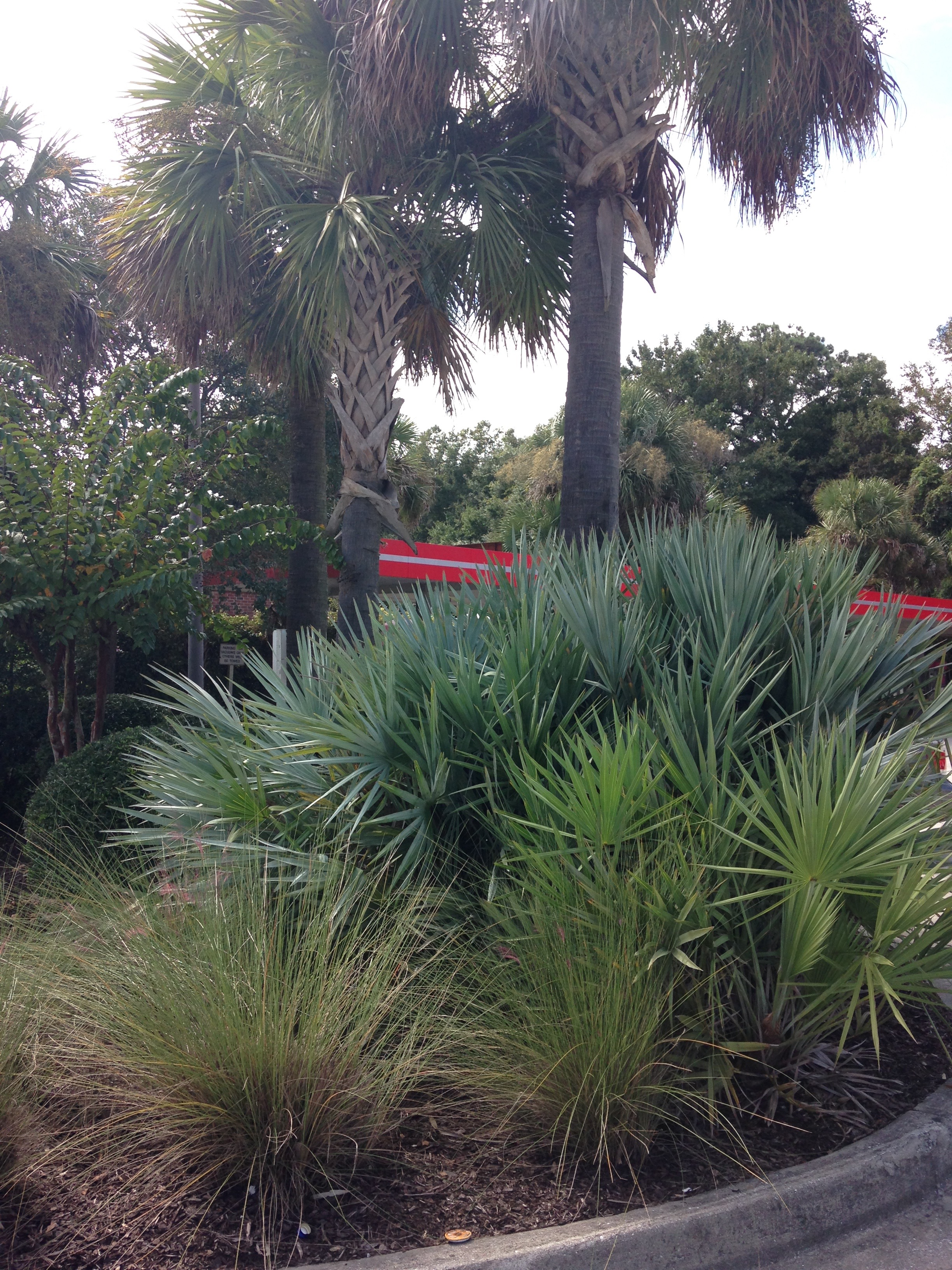 Charleston Residential Landscape Design - Coastal Lowcountry Landscape Design