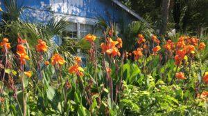Charleston Residential Landscape Design Folly Flip House