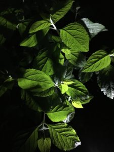Charleston Residential Landscape Design Night Lights Beauty Berry Bush
