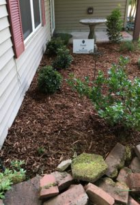 Charleston Residential Landscape Design Rustic Evergreen Bed 2