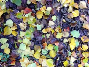 Lowcountry Vistas Charleston Landscaping Popcorm Tree Foliage