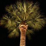 Seth Mason Charleston SC Landscape Design Palmetto Night