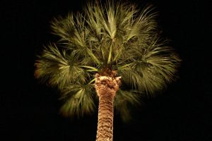 Seth Mason Charleston SC Landscape Design Palmetto Night