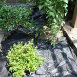 Seth Mason Charleston SC Landscape Design Weed Barrier
